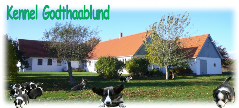 Godthaablund